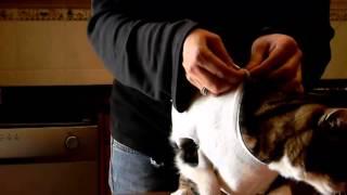 Download Cómo hacer un body casero para gatos convalecientes (2 modelos, gasa y panty) Video