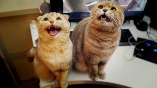 Download 간식 달라고 욕(?)하는 고양이들 - 수리노을 고양이가족 Video