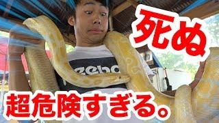 Download 日本一!?死ぬほど危険すぎて誓約書を書く動物園が怖すぎる!! Video