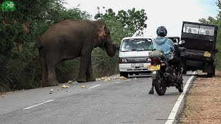 Download One giant elephant toll booth that accepts food for a pass Video