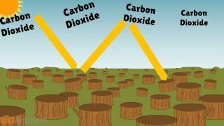 Download Deforestation Effects on Climate Video