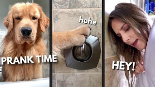 Download My Dog Pranks Me Into Getting What He Wants Video