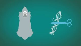 Download Dispelling myths around animal research Video