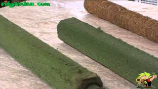 Download Fixing indoor climbing plants to a foam or moss support Video