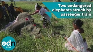 Download Two endangered elephants struck by passenger train Video