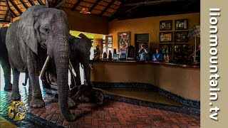 Download The Elephants that came to dinner | Mfuwe Lodge, Zambia Video