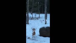 Download Bigfoot Encounter on Christmas 2014 in Northern Minnesota Video