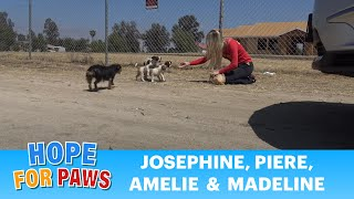 Download STOP DUMPING DOGS IN THE DESERT!!! WTH is wrong with people??? Video