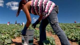 Download Fingers to the Bone: Child Farmworkers in the United States Video