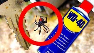 Download Deadly Spider Keys Of Death WD40 Spider Control Video