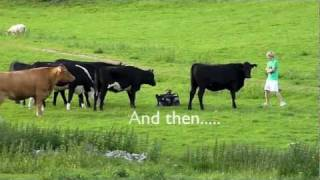 Download The Killer Cattle Video