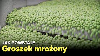 Download Jak produkowany jest groszek mrożony? - Fabryki w Polsce Video