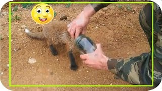 Download So Touching !! ANIMAL ASKS for people's help Video
