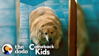 Download Watch What Happens When This Dog Loses 100 Pounds! | The Dodo Comeback Kids Video