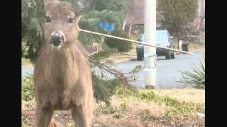 Download NY doe with arrow in her neck dies after 5 long months of suffering 2011 Video