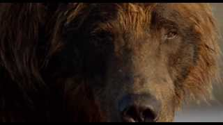 Download Disneynature's Bears - Trailer - Official | HD Video