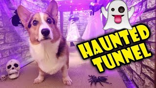 Download Building a CORGI Sized Haunted House 🐾👻 🎃   Life After College: Ep. 614 Video