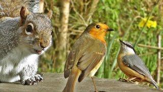 Download Videos Para Gatos - Aves en el Jardín Video