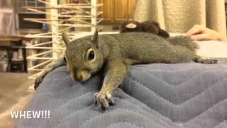 Download Squirrel Story Video