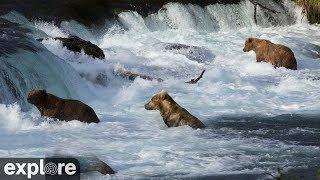 Download Riffles - Katmai National Park, Alaska powered by EXPLORE.org Video