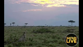 Download safariLIVE - Sunset Safari - December 9, 2018 Video