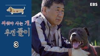 Download 세상에 나쁜 개는 없다 - 싸워야 사는 개, 투견 풀이 #003 Video