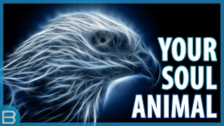 Download What Is Your Spirit Animal? Video