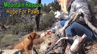 Download Hope For Paws: mountain rescue of three scared dogs - Ginger, Sage & Emma. Please share. Video