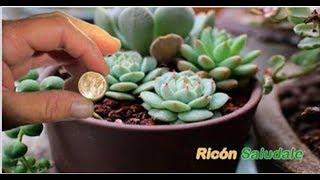Download Si logras conseguir esta plata te harás rico millonario, es un imán de dinero y energía positiva Video