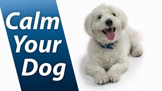 Download Calm Your Dog with White Noise   Relaxing Sound Soothes Puppy Anxiety Fast   10 Hours Video