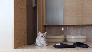 Download 하루 종일 집사만 기다리는 고양이 Video