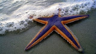 Download The Starfish for Kids with Pronunciation (and with photos) Video