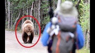 Download 11 FEISTIEST Bears Ever Video