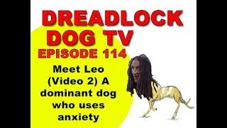 Download Episode 114 Leo VIDEO 2 A dominant dog who uses anxiety Video
