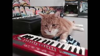 Download Keyboard Cat when it's winter out there Video