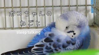 Download ポコちゃん寝言もスゴいんです。 寝言は寝て言え♪ Video