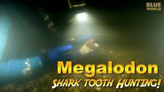 Download Megalodon Shark Tooth Diving!   JONATHAN BIRD'S BLUE WORLD Video