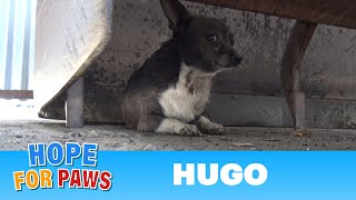 Download Little Hugo was attacked by dogs and finally gets rescued by Hope For Paws Video