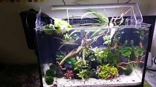 Download 25l akwarium moich synów. Video
