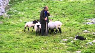 Download Caherconnell Stone Fort - Sheep Dog Demonstration Video