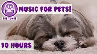 Download Music For dogs, Calm and Relax Your Dog at Home, Quickly Soothe Your Dog, Help Your Dog Sleep Video