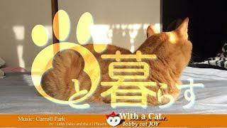 Download とら猫 JOY (ΦωΦ) - かまわれまち の日 Video