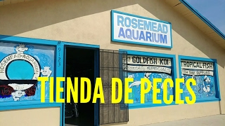Download tienda de peces en california Video