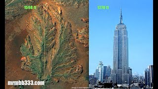 Download Man finds evidence of super massive tree w/leaves longer than the Empire State Building Video