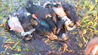 Download Caceria de Patos - 26-08-2011 Video