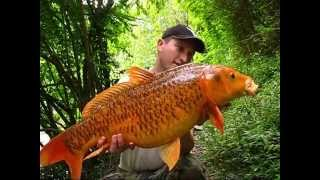 Download Carp Fishing Australia Part 5 - Koi Carp Runs Video