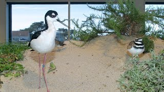 Download Live Aviary Cam - Monterey Bay Aquarium Video