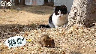 Download [특종] 실제상황! 고양이가 살아있는 생쥐를 만나면? 현실판 톰과제리 Video