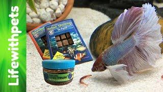 Download Feeding My Betta Fish Video