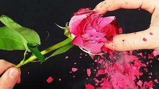 Download EXPERIMENT: LIQUID NITROGEN VS ROSE Video